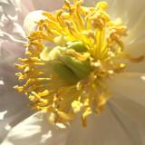 Blüte, Workshops, Astrologie, Lenormand, Yshouk Ursula Kirsch