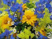 Blüten, Astrologie, Newsletter, Kartenlegen, Yshouk Ursula Kirsch