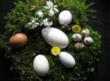 Eier, Nest, Astrologie, Astrologische Zeitqualität, Newsletter, Kartenlegen, Yshouk Ursula Kirsch